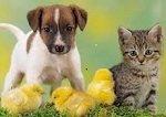 KarBer Petsitting