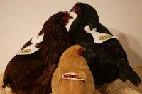 chickenarmor