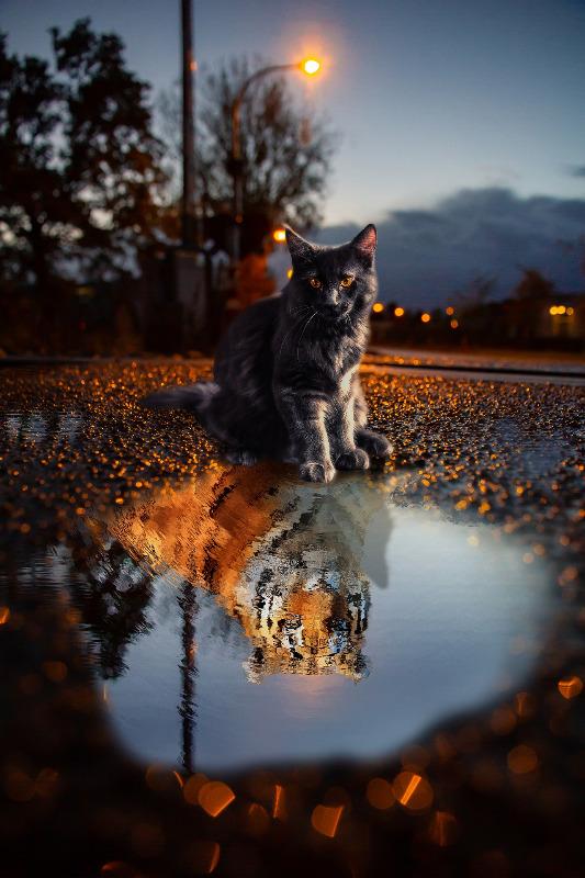cat-3975136_1920.jpg