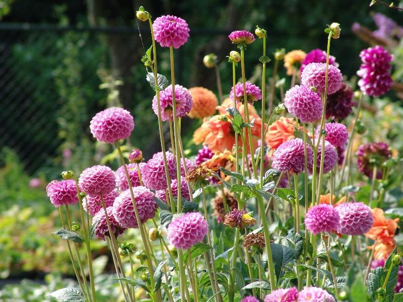 photoflower.jpg