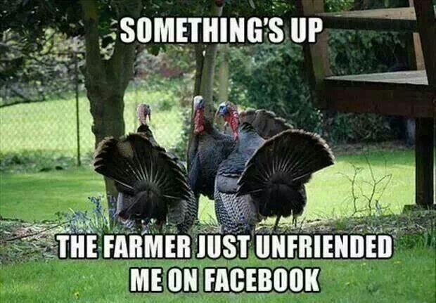 Funny Thanksgiving quotes - My Mountain Town: Conifer, Pine ...